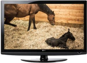 wireless foaling & calving camera system with night vision